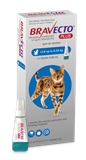 Bravecto Cat Plus 2.8 - 6.25kg-cat-The Pet Centre